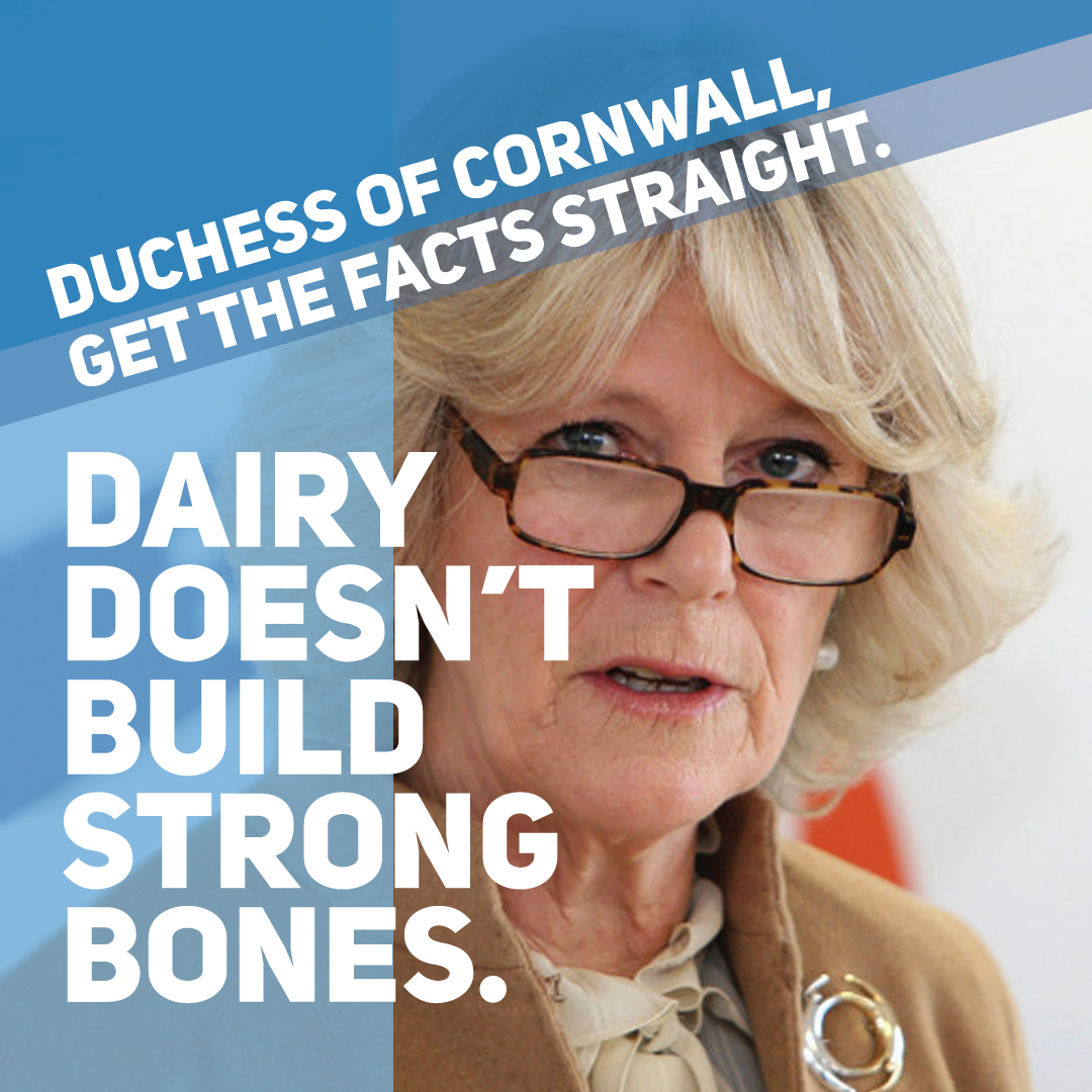 duchess of Cornwall graphic